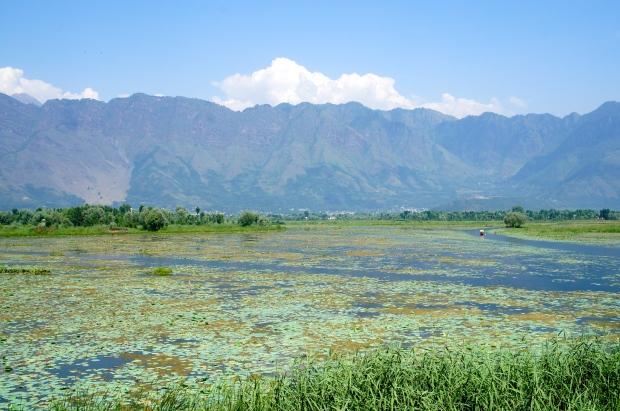 Famous Dal Lake